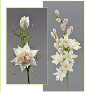 Bride Protea and Tuberose