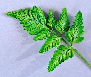 Fabfoliage