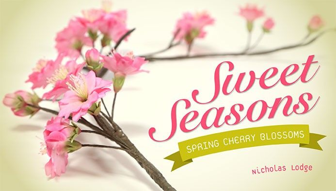 Cherry Blossoms are FINALLY Blooming!